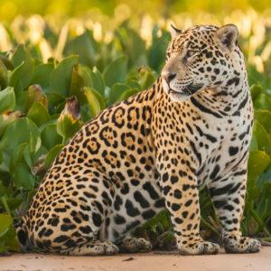 Pantanal Private
