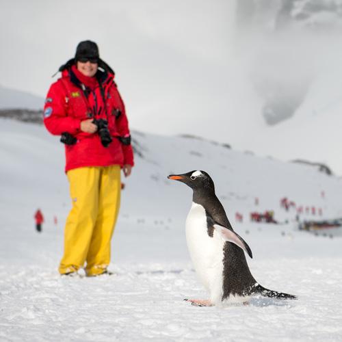 Falklands, South Georgia & Antarctic Islands
